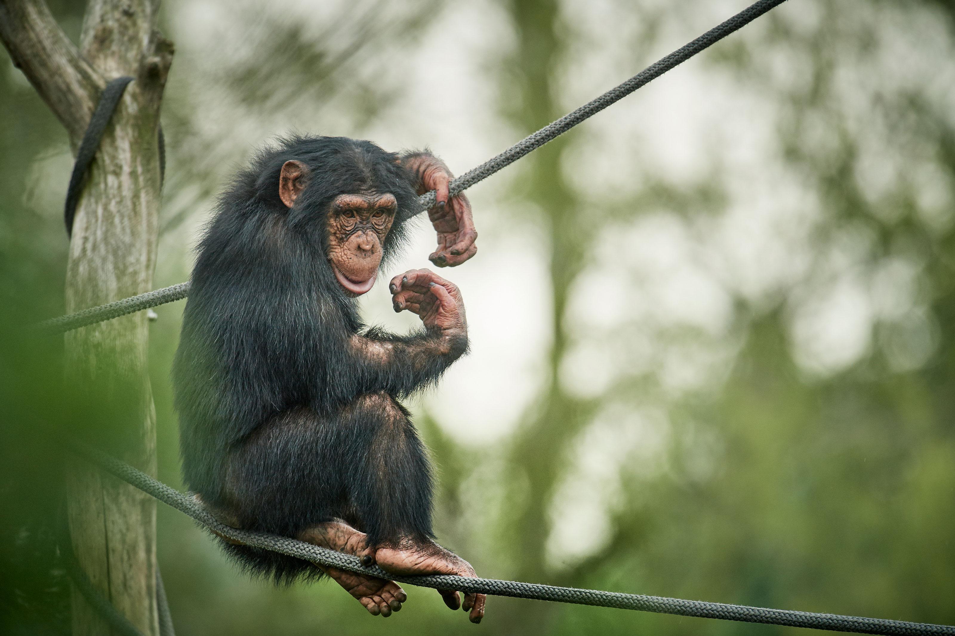 zoo odense årskort