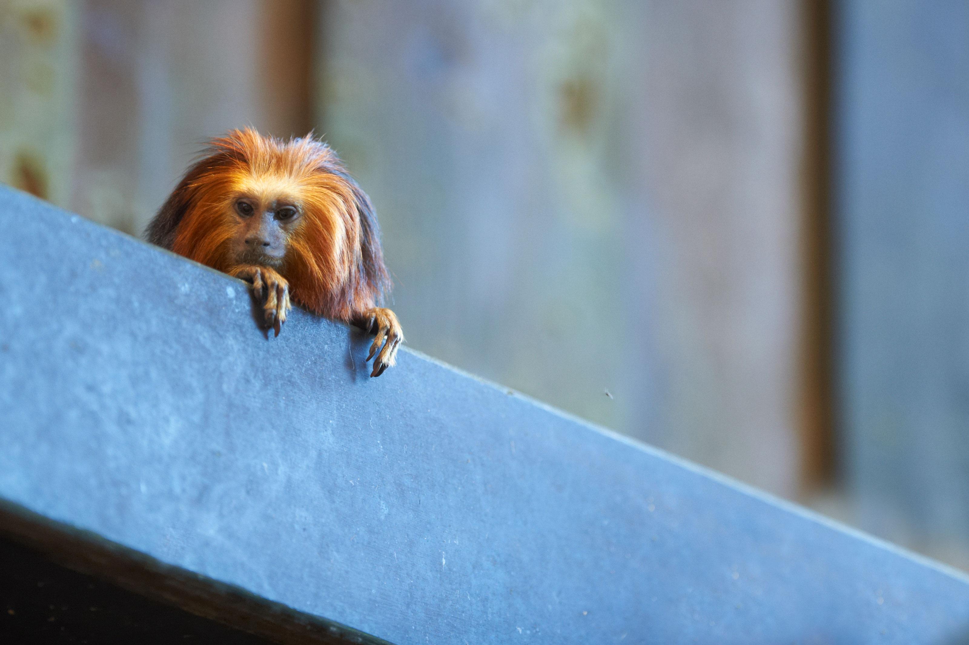 zoo Sjælland personlig assistent odense