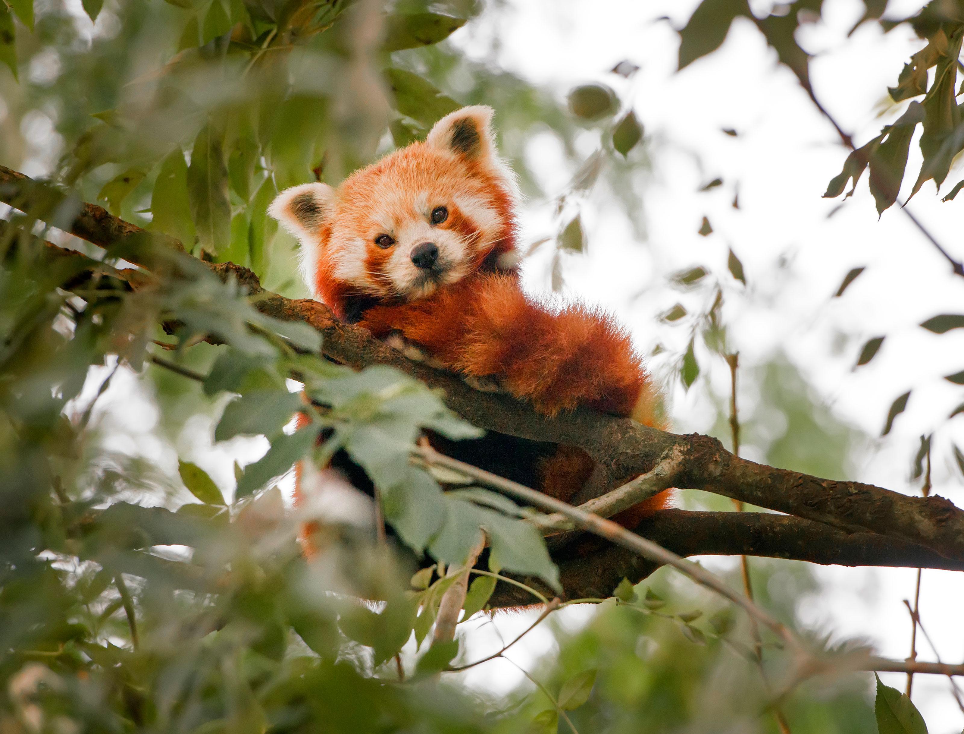 nøgne amatører odense zoo rabat